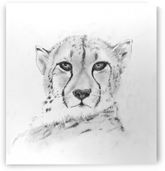 Cheetah by Shadow and Form