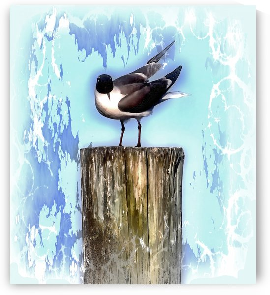 Seagull-Laughing Gull Pop Art  by HH Photography of Florida