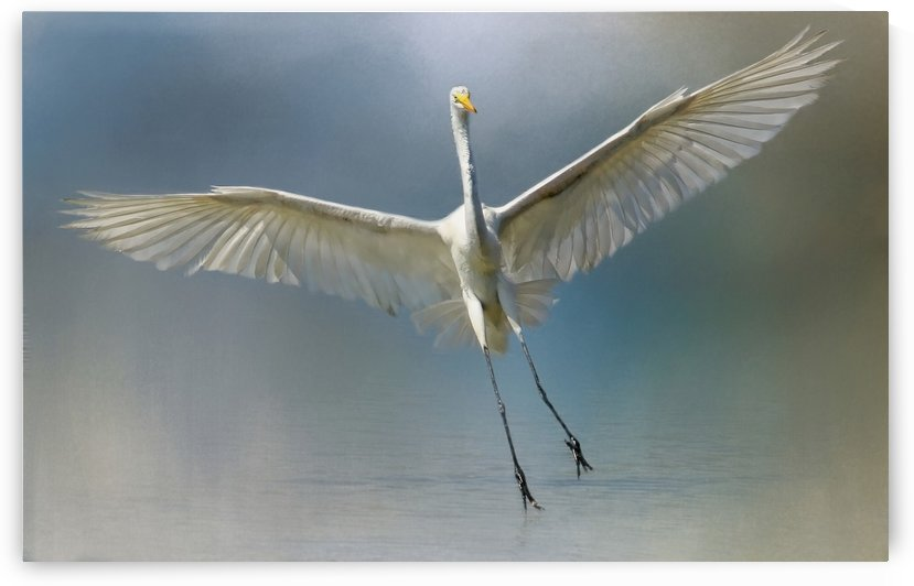 Angels Among Us by HH Photography of Florida
