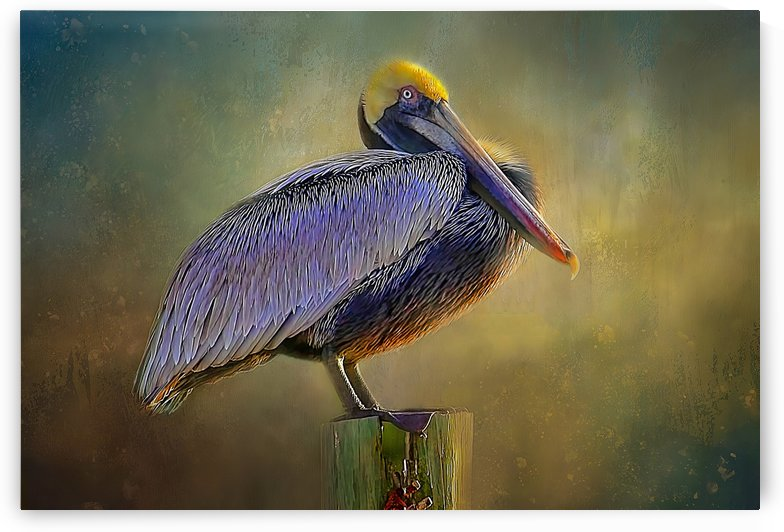 My Favorite Perch by HH Photography of Florida