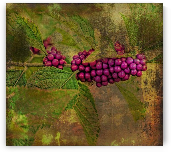 Beautyberry by HH Photography of Florida
