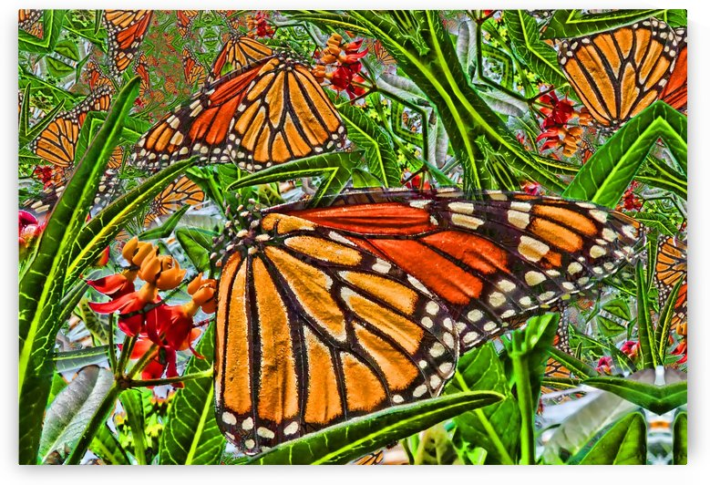Monarch Kaleidoscope by HH Photography of Florida