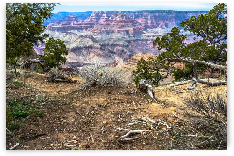 Near and Far Grand Canyon  by vincenzo
