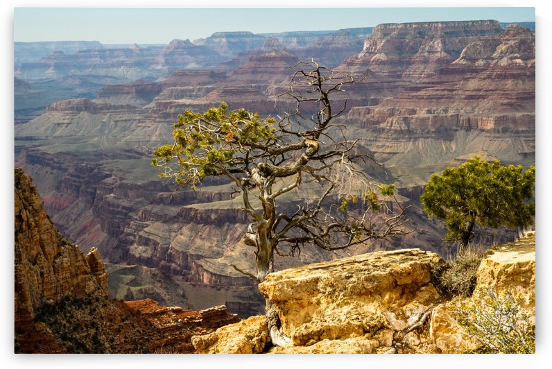 Wise one  Grand Canyon  by vincenzo