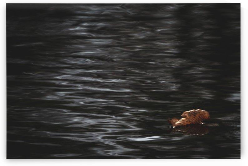 Aqueous Autumn  by Chris Couling