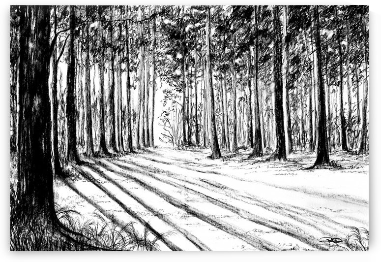 Pine Forest by DHWebbArt
