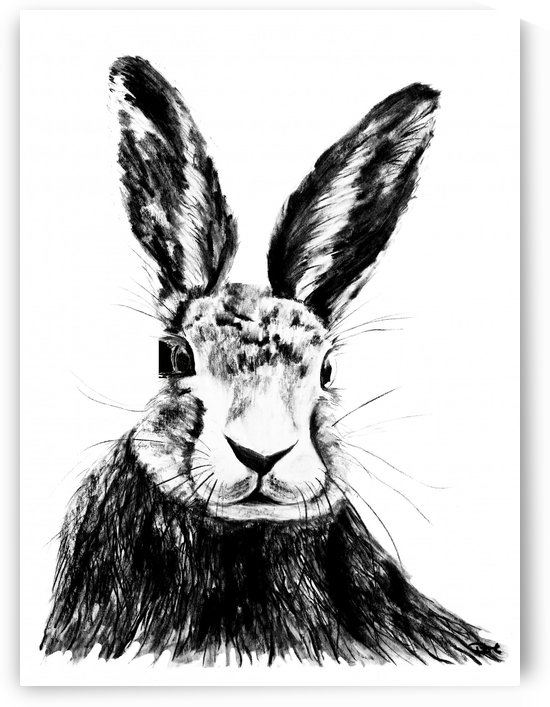 Portrait of a Hare-Jack Rabbit by DHWebbArt