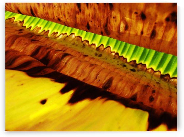 Leaf of Banana#3 by Rizal Ghazali