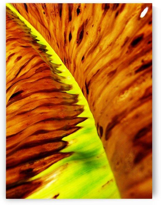 Leaf of Banana#2 by Rizal Ghazali