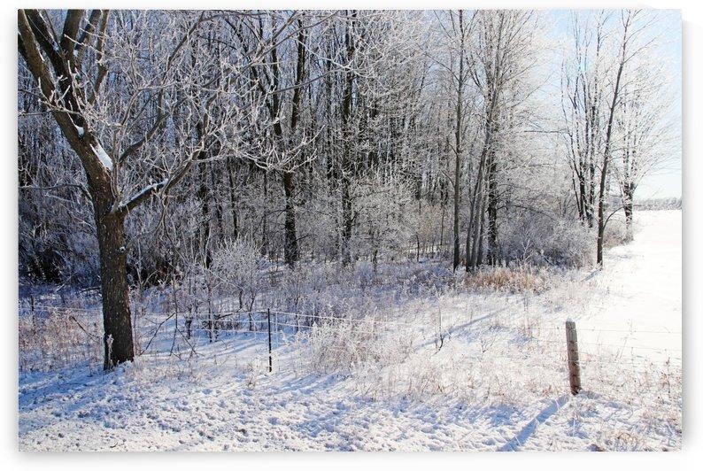 Frosty Winter Countryside by Deb Oppermann