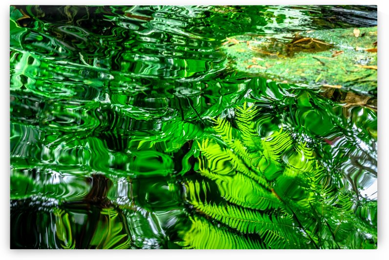 Reflection Pond by vincenzo