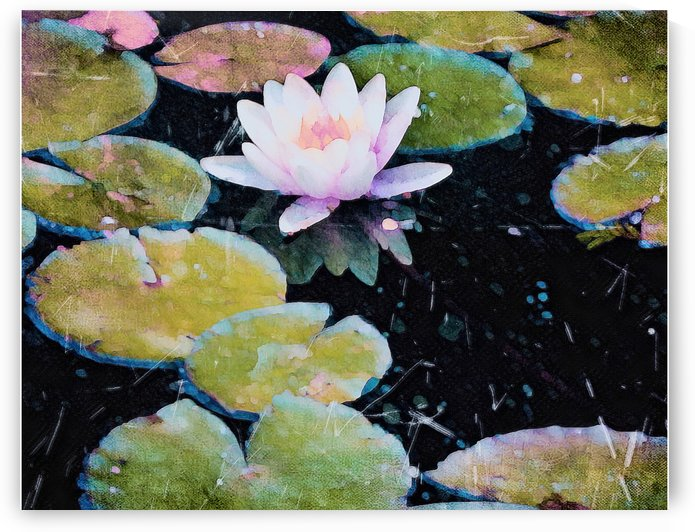 Lilly Pads Third Reflections by Jeremy Lyman