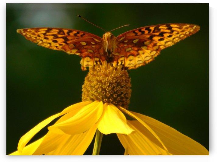 Fritillary butterfly by Debbie Caughey