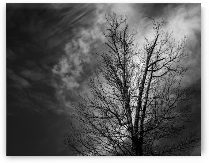 Tree in the Storm by Dave Therrien