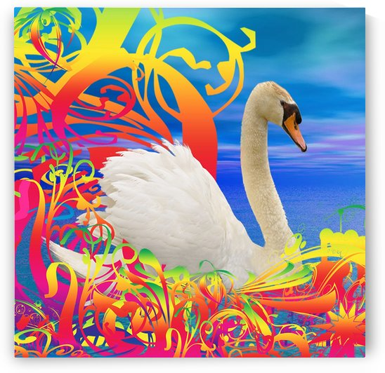 Swan nest by Matthew Lacey