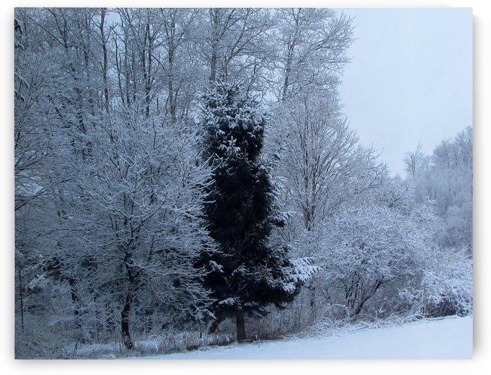 Winter Silence by Battaboom
