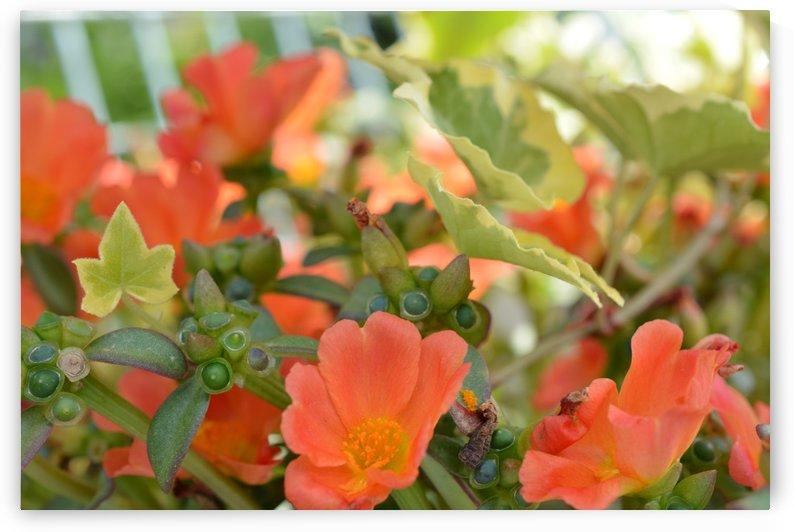 Orange Flowers Photograph by Katherine Lindsey Photography