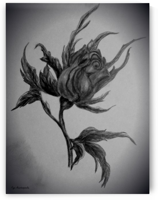 Wild Rose Sketch by Faye Anastasopoulou