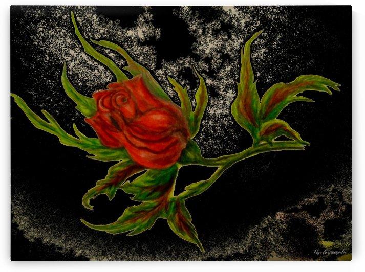 Wild Rose by Faye Anastasopoulou