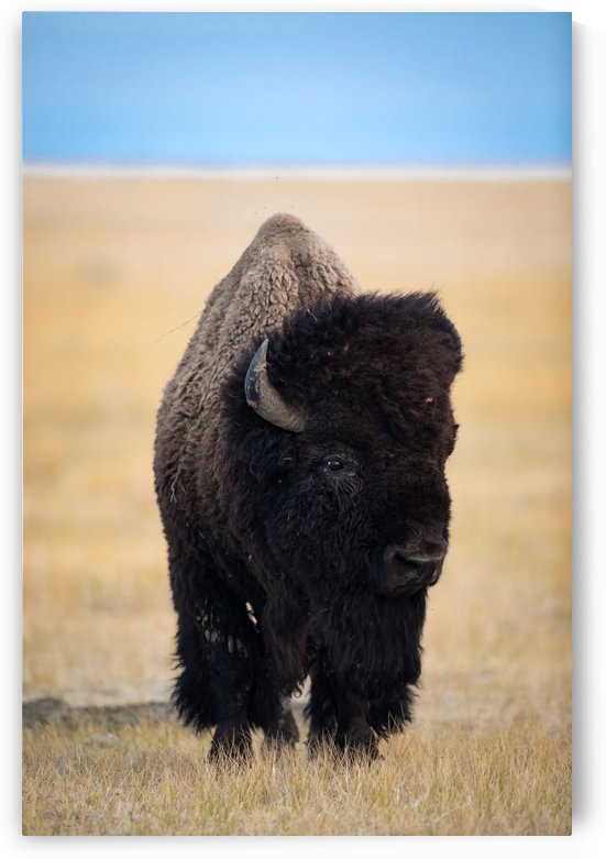 Canon EOS 5D Mark IV_180825_ 307 by Kevin Smith-s WildWildWestPhotography