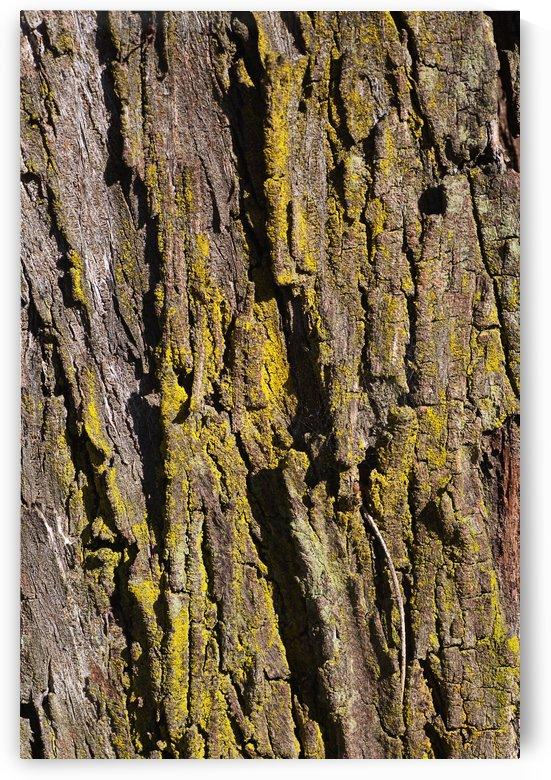 Moss Art Eucalyptus Bark  by Joy Watson