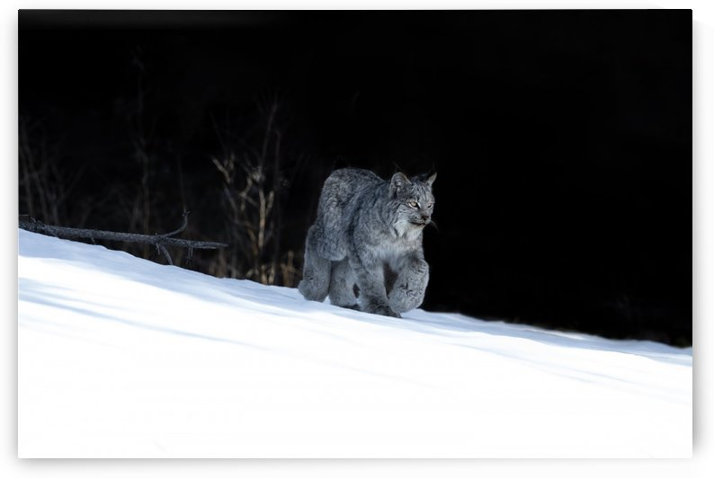 Canon EOS 5D Mark IV_190314_ 47 3_1580414999.2193 by Kevin Smith-s WildWildWestPhotography
