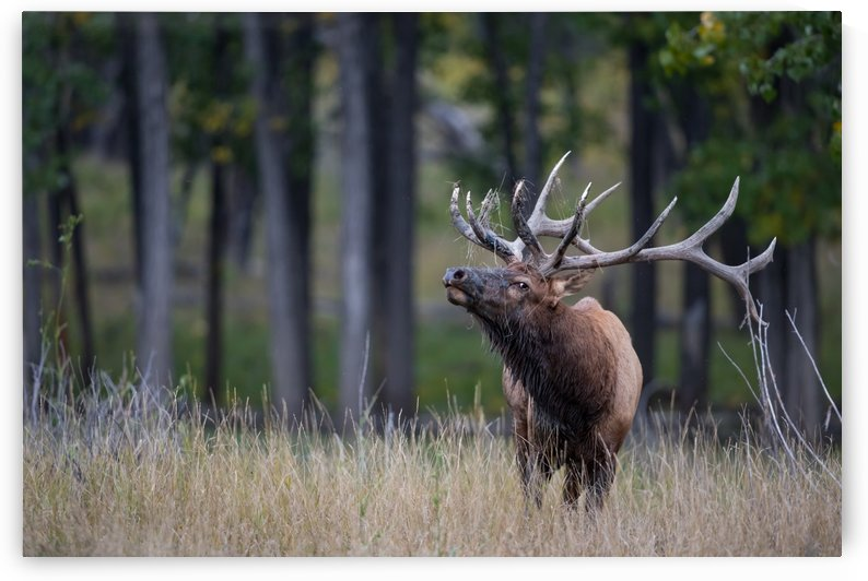 Canon EOS 5D Mark IV_180925_ 101 by Kevin Smith-s WildWildWestPhotography