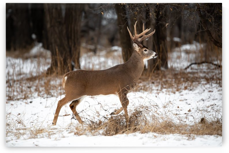 Canon EOS 5D Mark IV_191204_ 118 2 by Kevin Smith-s WildWildWestPhotography
