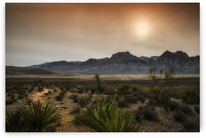 Desert Trail at Sunset by Frank Wilson