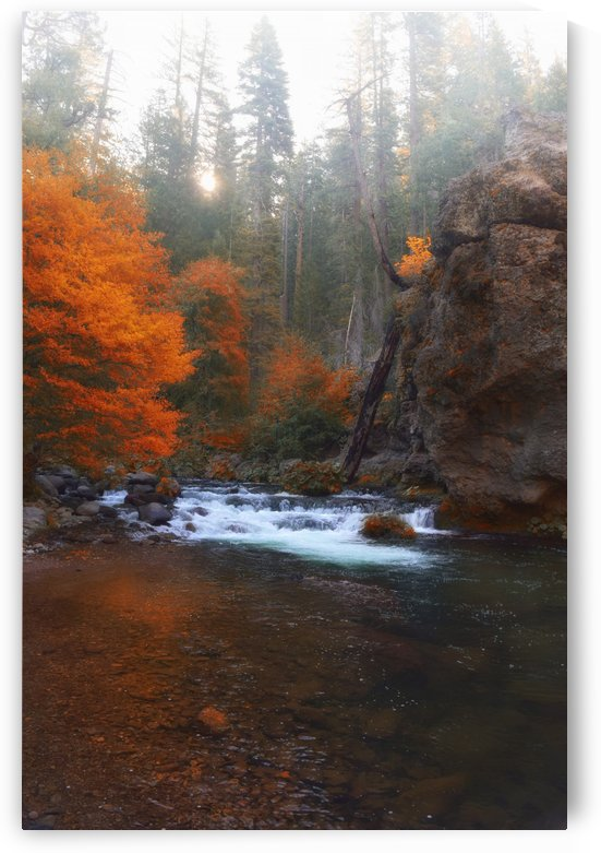 Autumn River by Frank Wilson