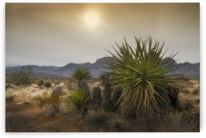 Desert Mountain with Yucca Plants by Frank Wilson