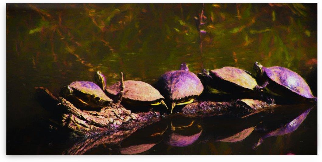 Freshwater Turtles Watercolor by Aurelia Schanzenbacher Sisters Fine Arts