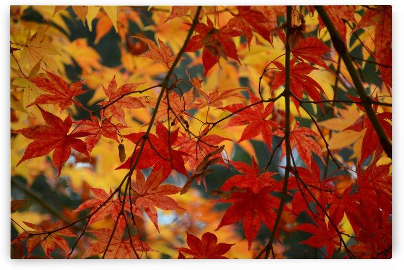 Fall Foliage Photography  by Katherine Lindsey Photography