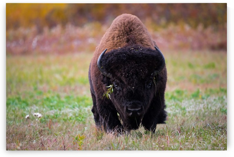 Canon EOS 5D Mark IV_180911_ 127 by Kevin Smith-s WildWildWestPhotography