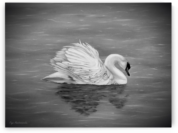 Single Swan by Faye Anastasopoulou