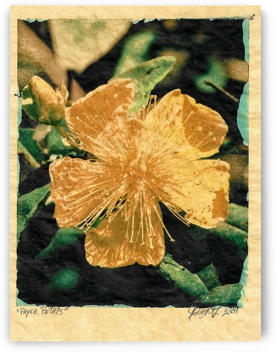 paper petals by Jon Knight Loruenser