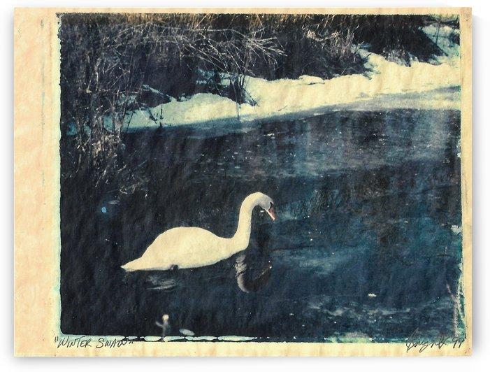 winter swan by Jon Knight Loruenser