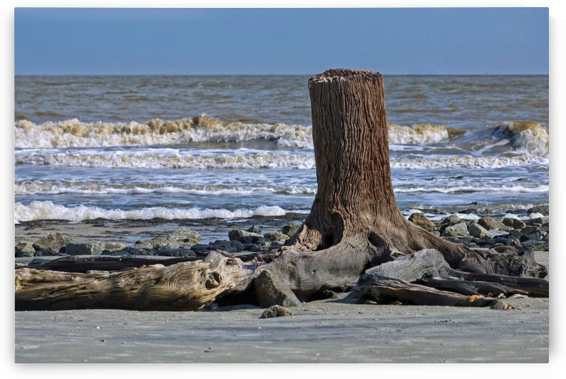 Driftwood Beach Post by Bill Swartwout Photography