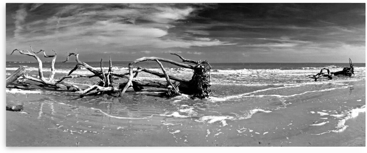 Driftwood Beach Panorama 103 Black and White by Bill Swartwout Photography
