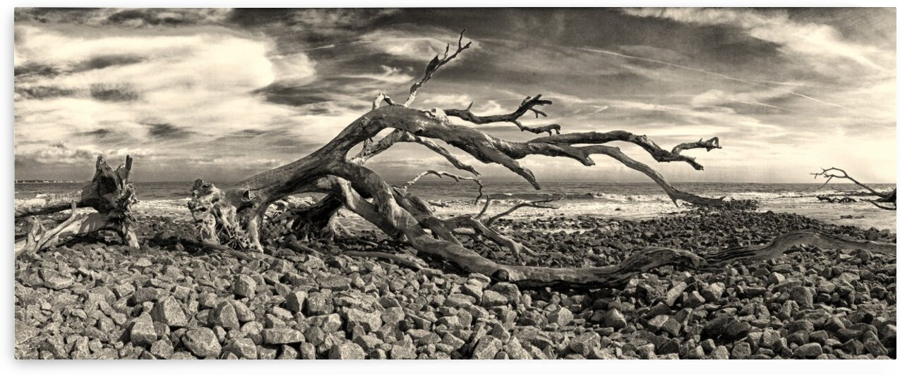 Driftwood Beach Panorama Black and White by Bill Swartwout Photography