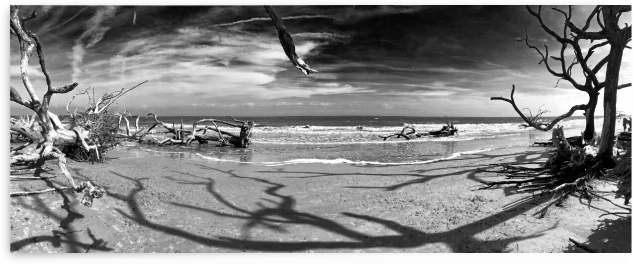 Driftwood Beach Panorama Shadows Black and White by Bill Swartwout Photography