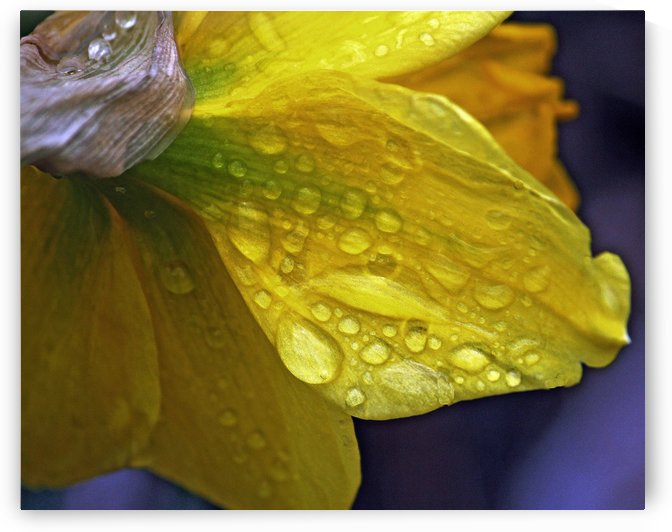 After the Rain by Jeanette Buffalo