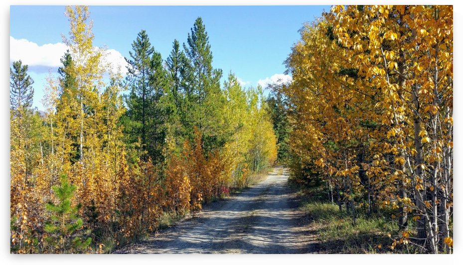 Fall colours  by Stuart Spofford