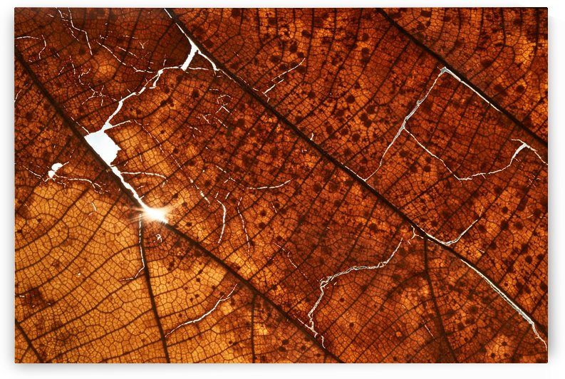 Background of the texture of dry leaf by Krit of Studio OMG