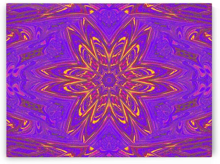 Orange Purple Daisy by Sherrie Larch