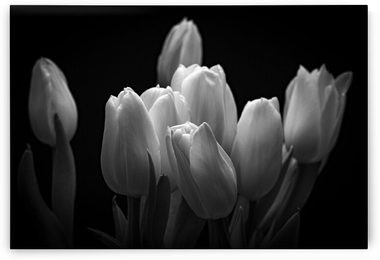 Renes Tulips by Dave Therrien