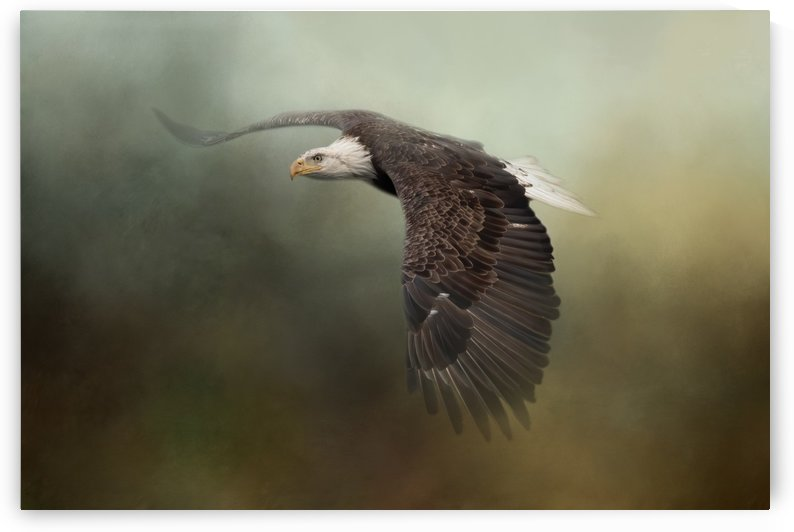 Majestic by Michel Soucy