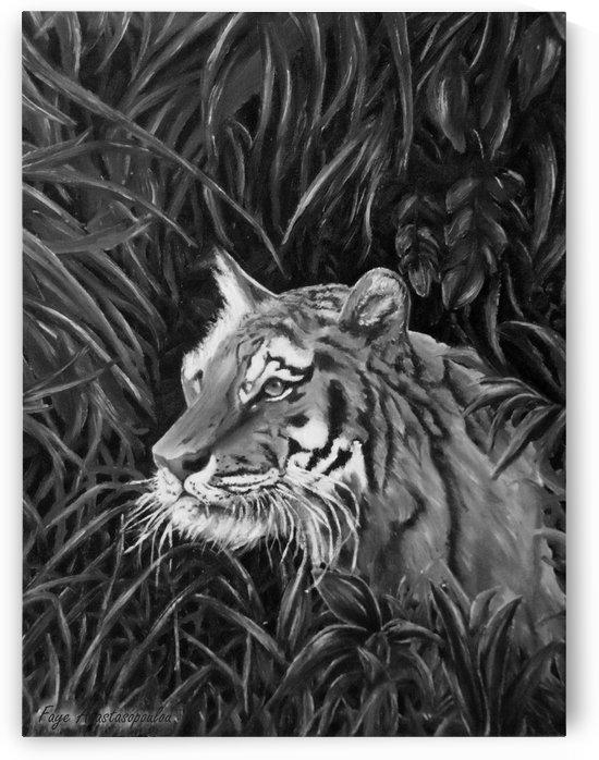 Tiger Portrait by Faye Anastasopoulou