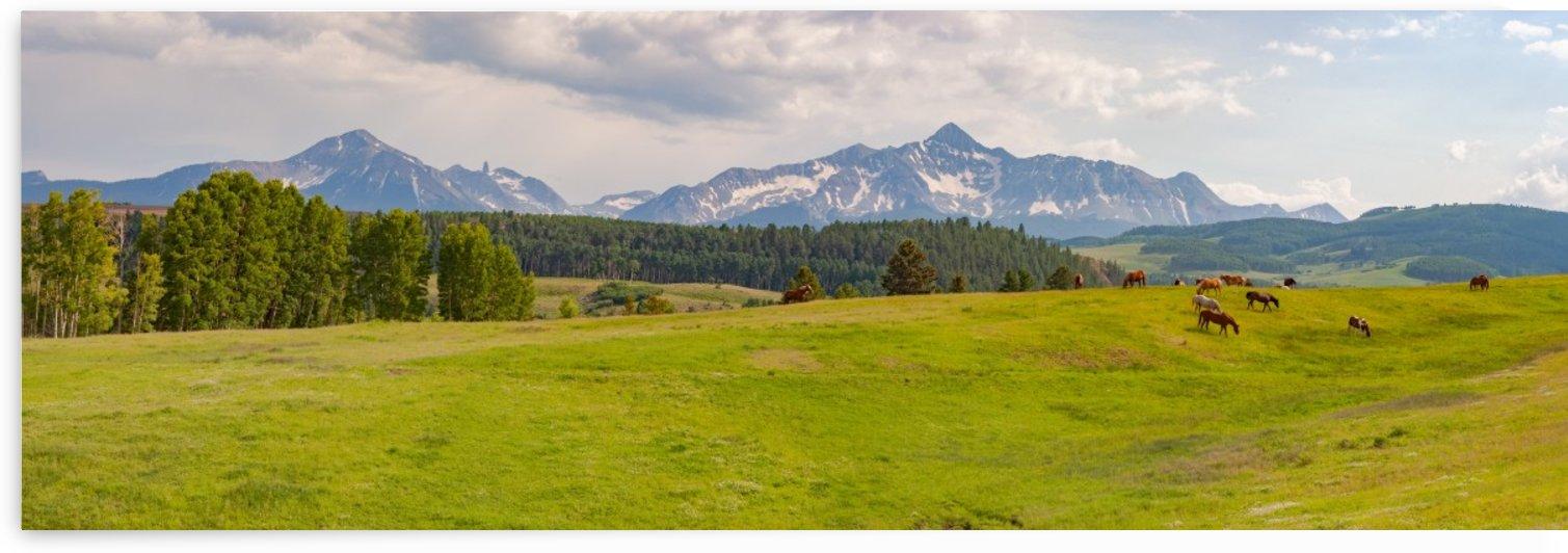 Wilson Peak with Horses by John Freeman
