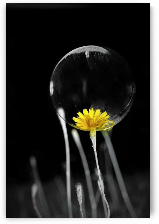 Passe present by Annie St-Pierre Photographie